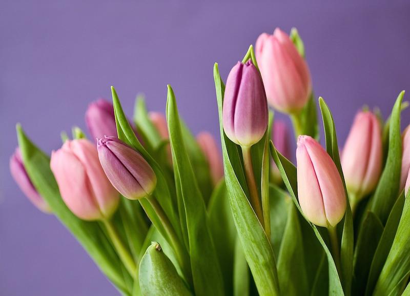 Sorten von Frühjahrsblühern