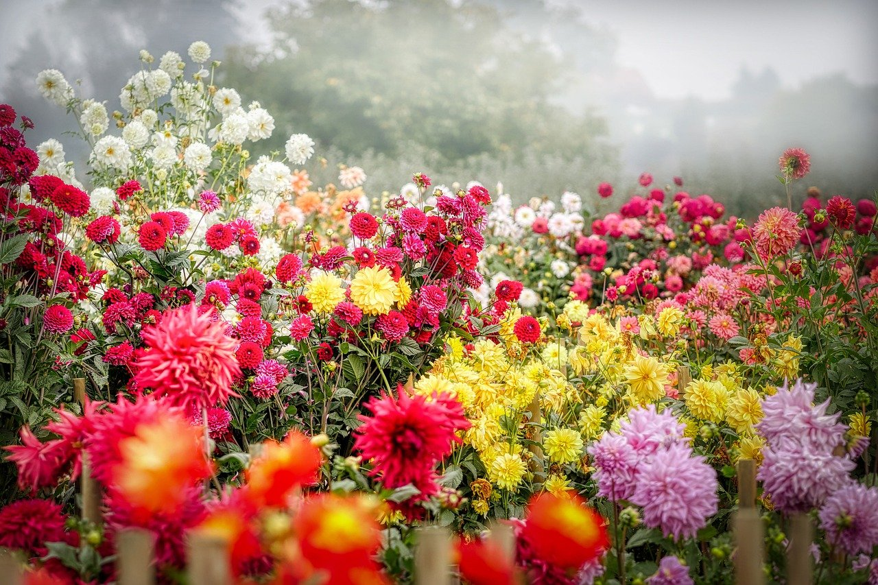 Blumenpflege im Herbst
