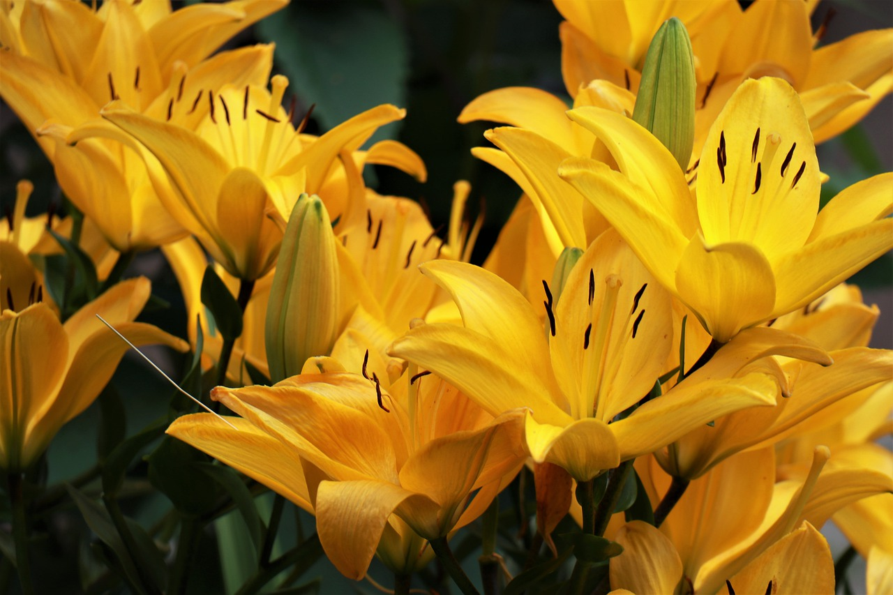 Die schönste Blume der Sommerzeit