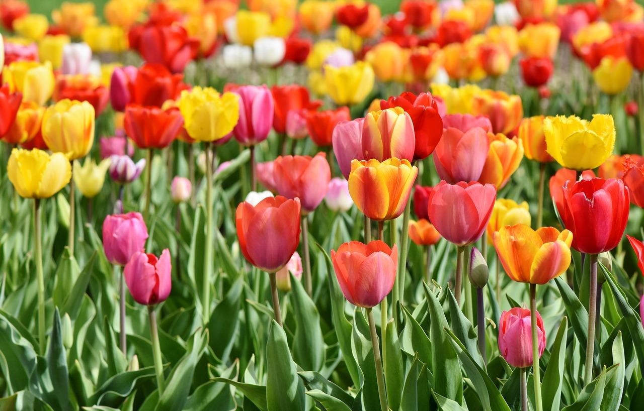 Frühlingsblumen ohne besondere Anforderungen