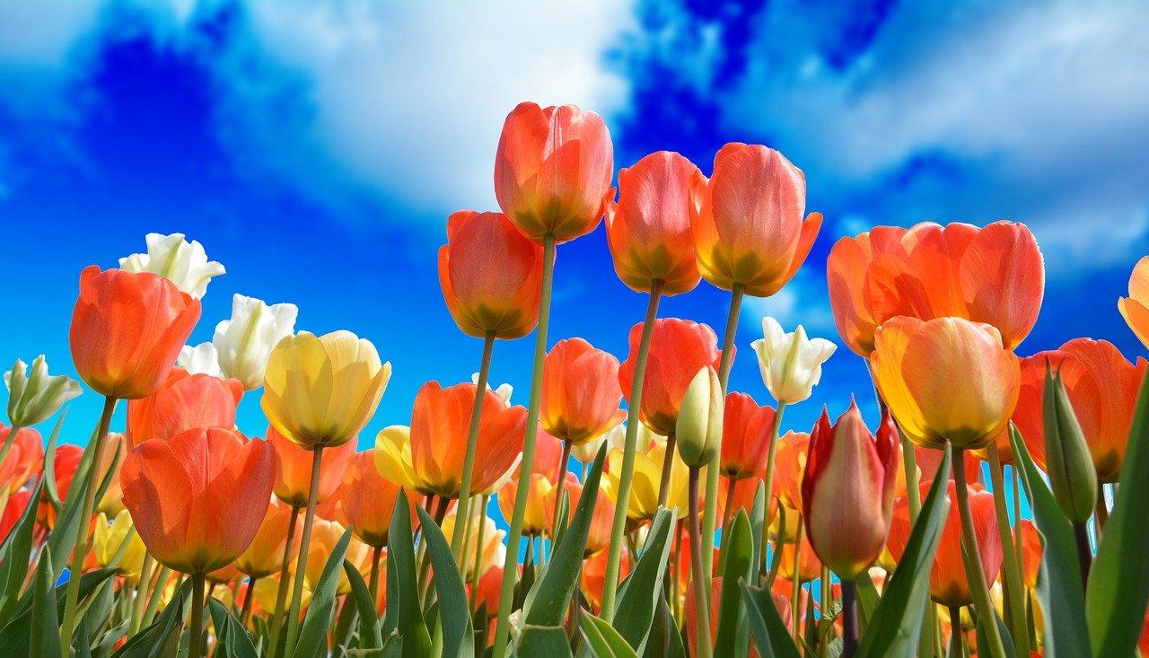 Pflege von Frühjahrsblühern